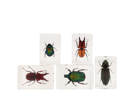 Assortiment Insect